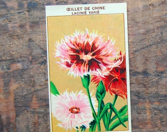Original Vintage Flower Seed Label, Lithograph, French, Chinese Carnation, New Old Stock