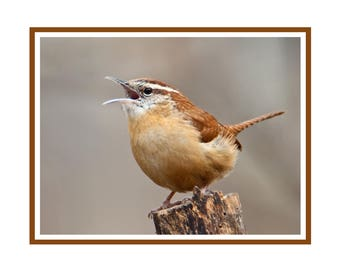 Carolina Wren Note Card Pack
