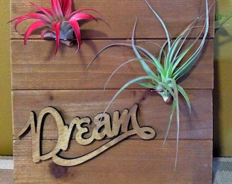 Wooden Air Plant Wall Plaque