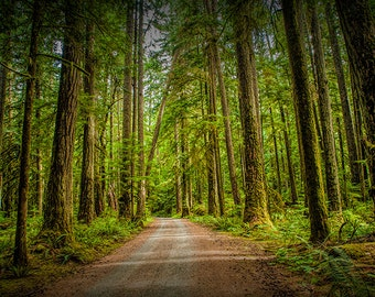 Dirt Road, Forest Path, Rain Forest, Vancouver Island, British Columbia, Canada Landscape, Wilderness Landscape, Fine Art Photograph