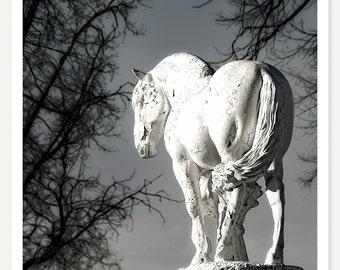White Horse - Fine Art Photograph - Horse Photo - Still Life - Monochromatic Art - White Black Grey Gray Blue