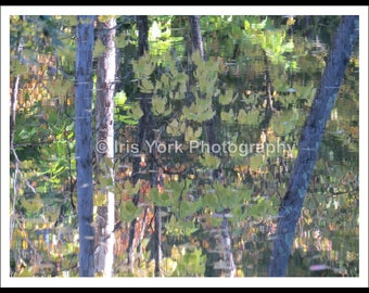 Tree and Leaves Reflections in the Water in the Fall in Woodstock New York, Nature and Landscape Photography Prints, Wall Art