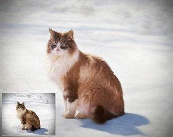 Custom Digital Oil Painting of Your Pet