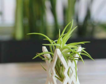 """Unique """"Breathing"""" Air Plant Holder, Air Plant Container, Air Plant Planter, Air Plant Display, Modern Style,"""