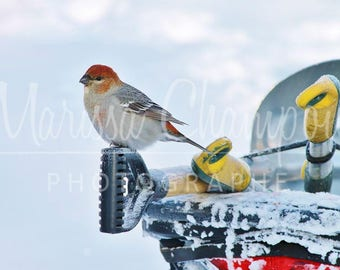 Lustrous blank greeting card: birds on sled in winter