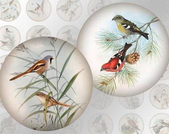 Vintage birds nature illustrations 1 inch circles  digital collage sheet  (302) buy 3 get 1 bonus