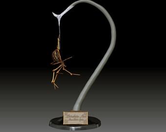 3D Digital Model File Brass Widow Display
