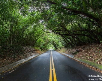 A Canopy of Trees Creates a Tunnel Over a Road on Oahu, Hawaii  photo picture fine art metal print
