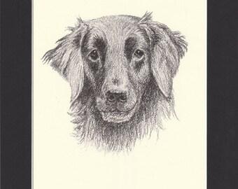 Flat-Coated Retriever Vintage Dog Print C.Francis Wardle 1935 Drawing Mounted with Mat Retriever Print Retriever Dog