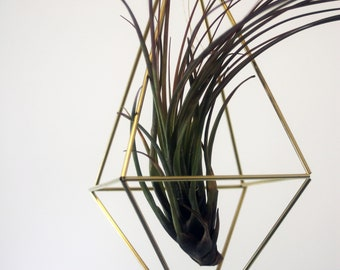 Himmeli Plant Hanger with Air Plant - Himmeli Planter - Geometric Plant Holder - Air Plant Holder - Gold Himmeli Decor