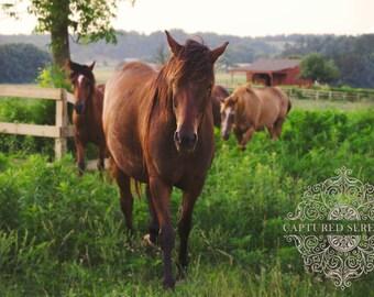 Beautiful herd of stallions