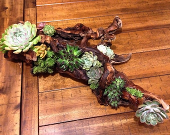 Faux or Real wood Succulent Arrangement (please specify your choice between faux or real succulents when ordering.)