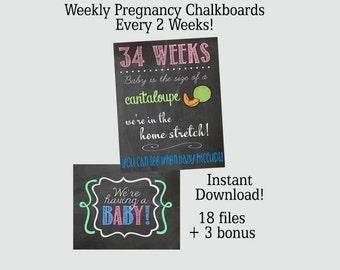 Weekly Pregnancy Chalkboard Set of 16 weeks Plus 3 BONUS - 8x10 OR 16x20 - Instant Download SALE!!