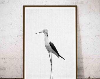 Stilt Bird Printable Black White, Stilt wall decor, Stilt Bird Art, Baby Stilt Gift, Bedroom Decor, Printable kids gift, Zoo Animal Nursery