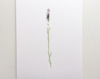 "Single Sprig of Lavender Original Watercolor Painting [6"" x 8""]"