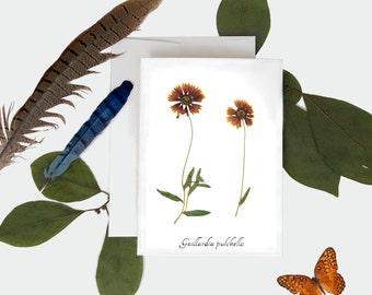 Firewheel Botanical Print Card - Pressed Plant Greeting Card
