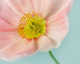 Flower Photography, Botanical Wall Art, Poppy Photo, Nature Art, Floral Print, Yellow, Teal, Aqua, Pastel, Spring Home Decor - Pink Poppy