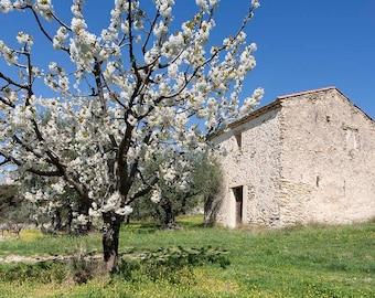 France Photography Provence fruit tree blossom masonry out building fine art print