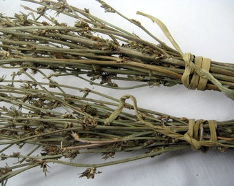 Dried plants, 2 bunch of chicory, bundle of wildflower, natural floral supplies for DIY, home decor, rustic stile, filler for vase