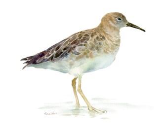 Bird Print, Watercolor Painting, Bird Wall Art