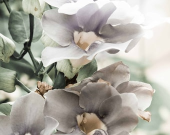 Muted colors Sky Vine Wall Hanging Canvas