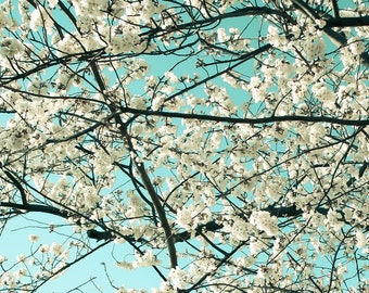 Cherry Blossom Photography - Washington DC Photo - Teal, Turquoise - Vintage, Soft, Retro - Cherry Blossom Festival - Floral Photography