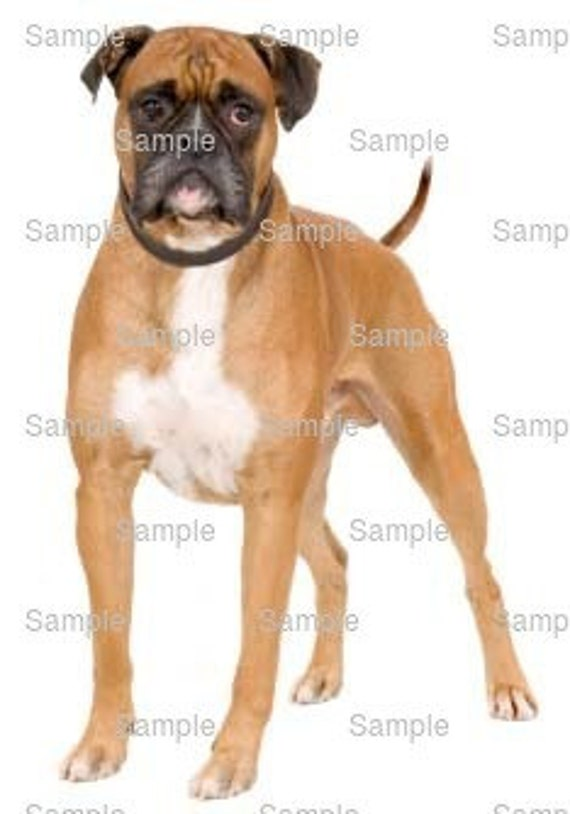 Boxer Dog Birthday - Edible Cake and Cupcake Topper For Birthday's and Parties! - D6614