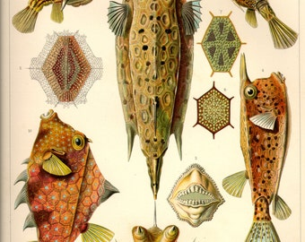 Botanical decor, Nature decor, Nature illustration, Botanical, Nature print, Botanical art, Nature life, 42