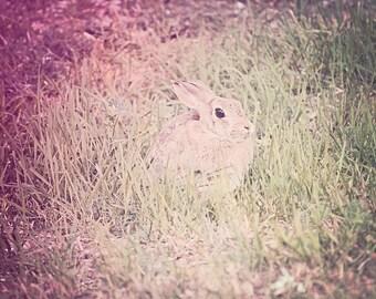 Pink Bunny - 8x10 photograph - fine art print - nature - nursery art - bunny rabbit in field