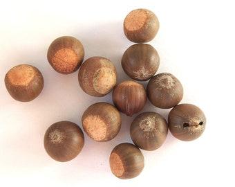 Small Pin Oak Acorn Nuts, Quantity of 28, Hoop17