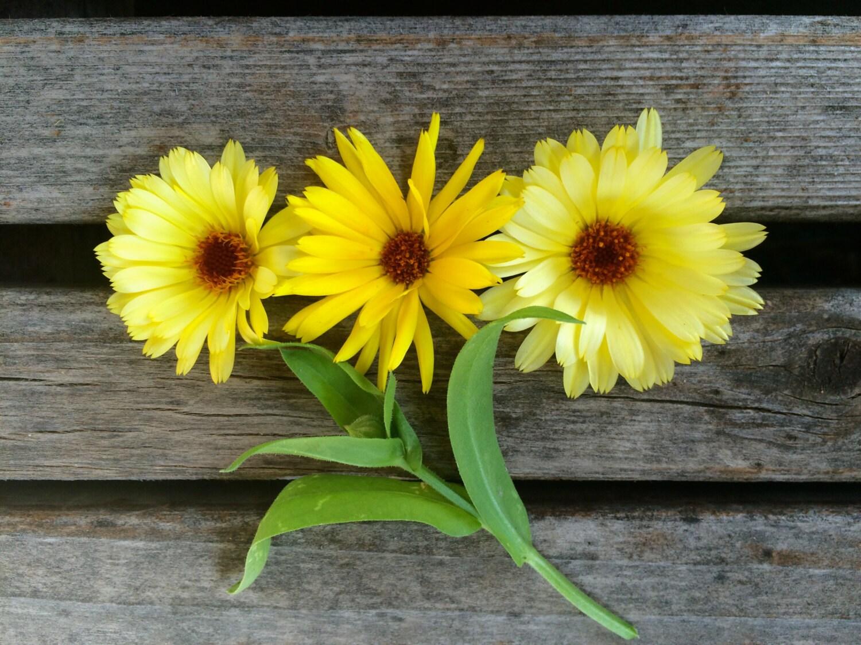 Sale calendula resina yellow medicinal high resin content zoom izmirmasajfo Image collections