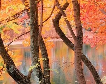 Autumn tree photography, orange autumn leaves, Kentucky trees, nature, fall leaves, orange art, fine art print, outdoor photos, Twisted Fall