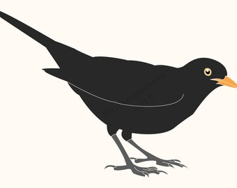 Instant digital download. Original illustration of a Blackbird by Thomas Harrison