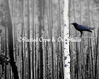Black Bird Crow Tree Birch Forrest Black White Country Art Matted Picture A135