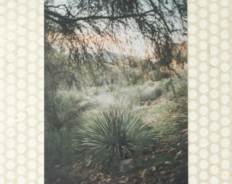 Spoon Yucca and Mesquite Tree Pair Photo Print