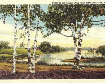 Traverse City, Michigan, Silver Lake, Birches - Vintage Postcard - Postcard - Unused (Q)
