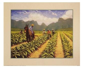 Farmer Men Cropping Tobacco Fields 16x20 Black Art Print