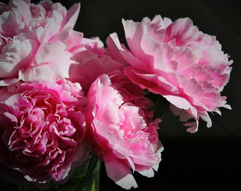 Peonies- instant download
