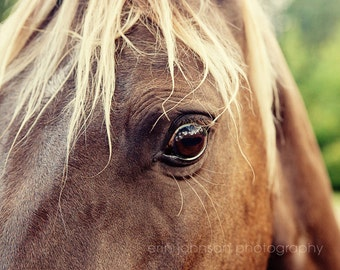 horse photography, rustic farmhouse decor, brown wall art, animal photo, baby nursery art, large farm wall art