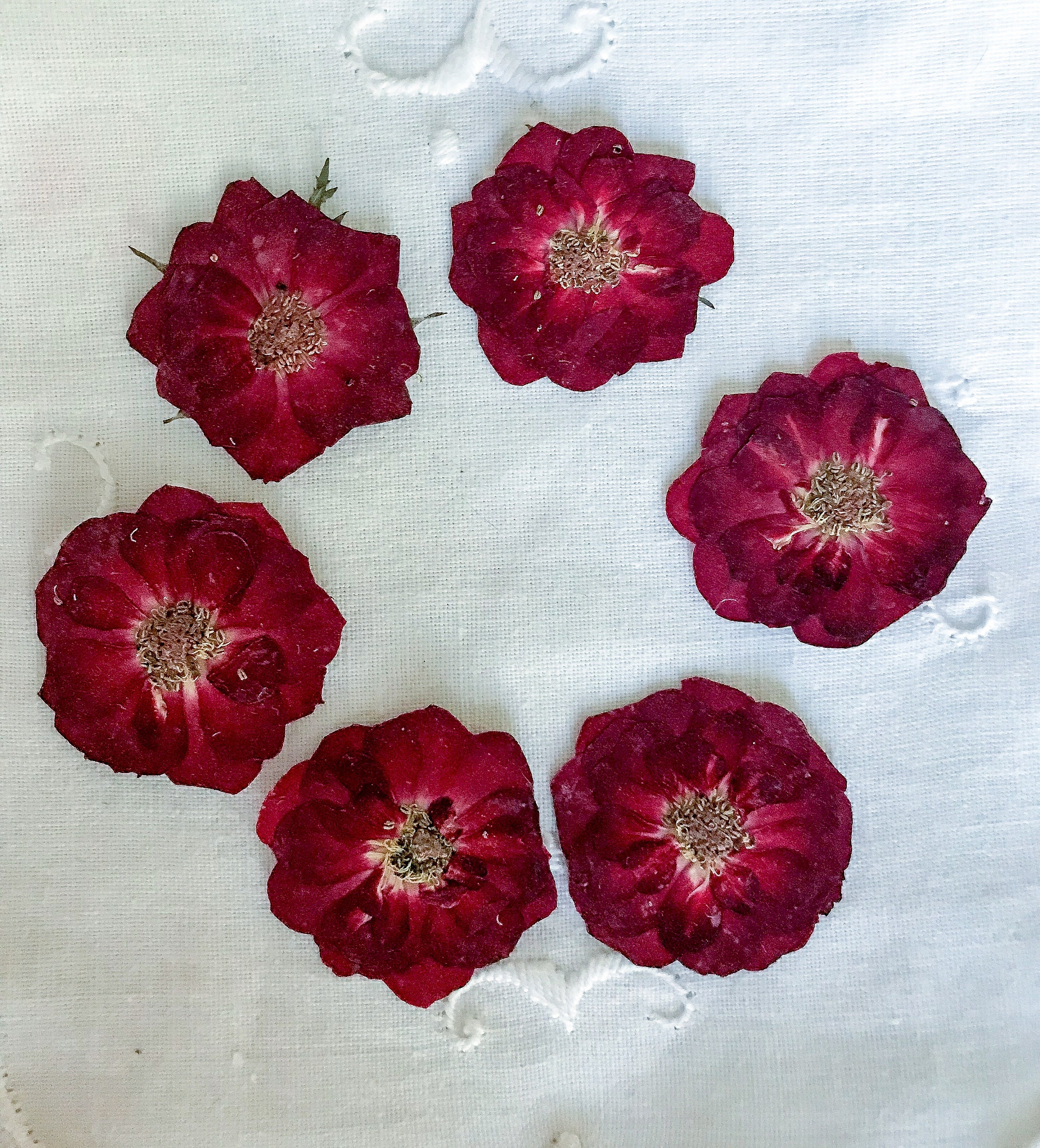 Pressed Roses Dried Roses Pressed Small Roses Real Red Roses