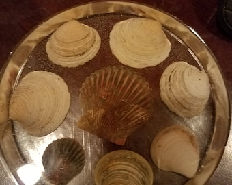 Sea Shell Coaster 3-Pack  ***Shock-Resistant***