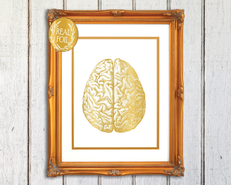 Anatomie des Gehirns zu drucken menschliche Gehirn Anatomie