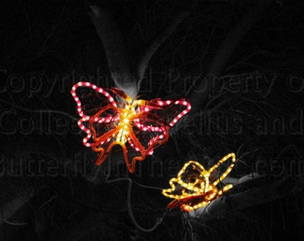 Holiday Lights Brilliant Yellow and Red Butterfly Light in Park Night Scene Photography Wall Art Home Decor Christmas Decorations in Zoo