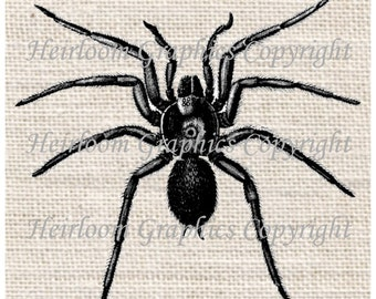 Spider Iron On Digital Transfer Spider Insect Transfer