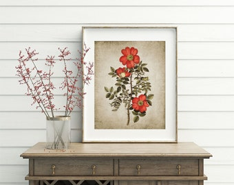 Wild Rose Wall Art Print, Rustic House Decor, Vintage Red Rose Antique Botanical Poster Printable Art - Single Print #43 INSTANT DOWNLOAD