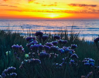 Wildflowers and sunset at the beach