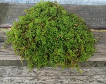 Fern Moss, Terrariums, Fairy Gardens, Crafts, Wreaths, Woodland Wedding, Orchids, Landscaping, Natural, Organic, Gift