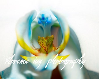 Orchid Macro Fine Art Photo Print Metallic Paper