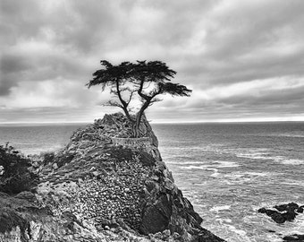 "Black and White Photography - tree Pacific ocean 20x30 coastal landscapes 16x20 tree pictures 11x14 tree photography large wall art ""Never"""