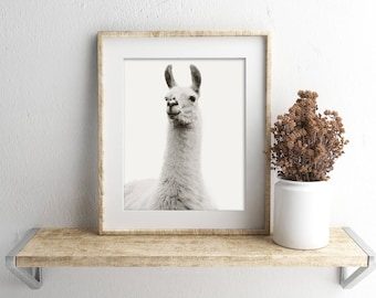 White on White Llama Photograph in Black and White, Vintage Style Animal Photography, Physical Print